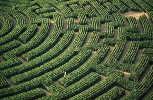 Maze_hedge
