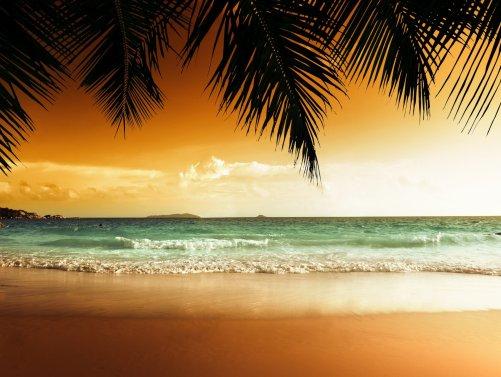 palm sand ocean